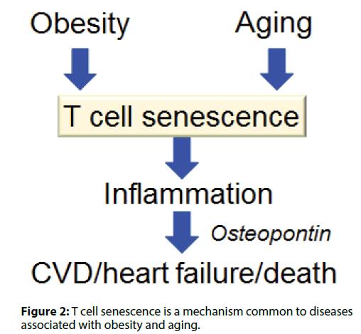Interventional-Cardiology-mechanism