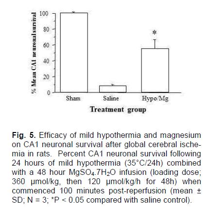 experimental-stroke-hypothermia-magnesium