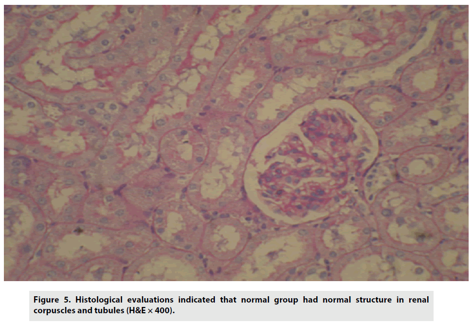 imaging-in-medicine-Histological-evaluations