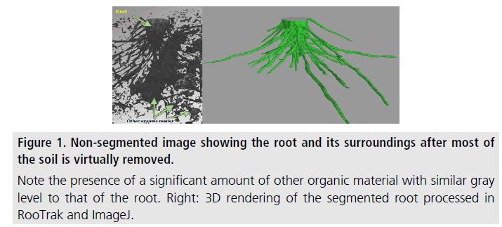 imaging-in-medicine-organic-material