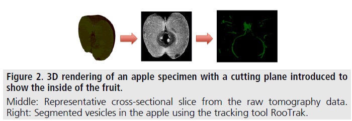 imaging-in-medicine-cutting-plane
