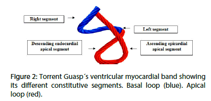 interventional-cardiology-constitutive-segments